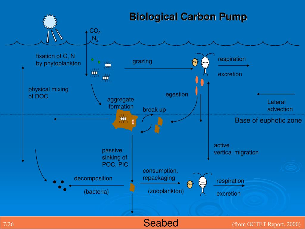Biological Carbon Pump