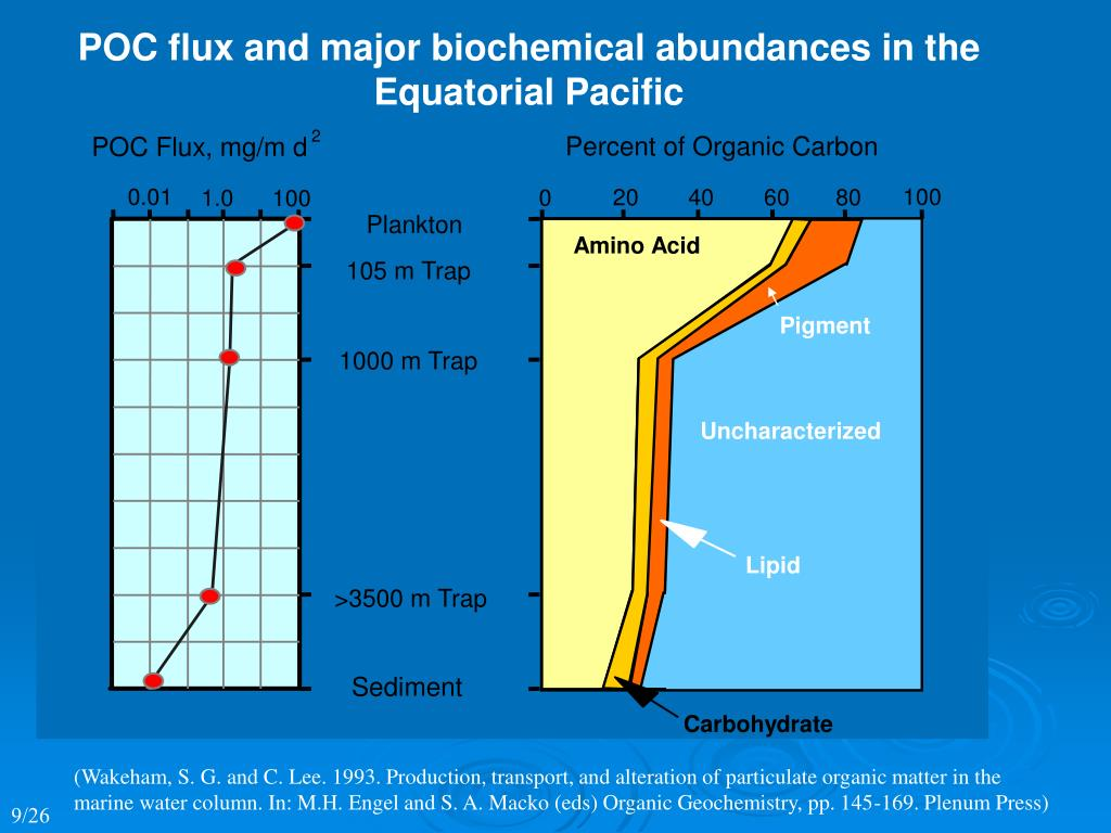 POC flux and major biochemical abundances in the
