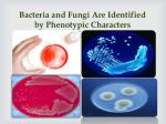 bacteria and fungi are identified by phenotypic characters