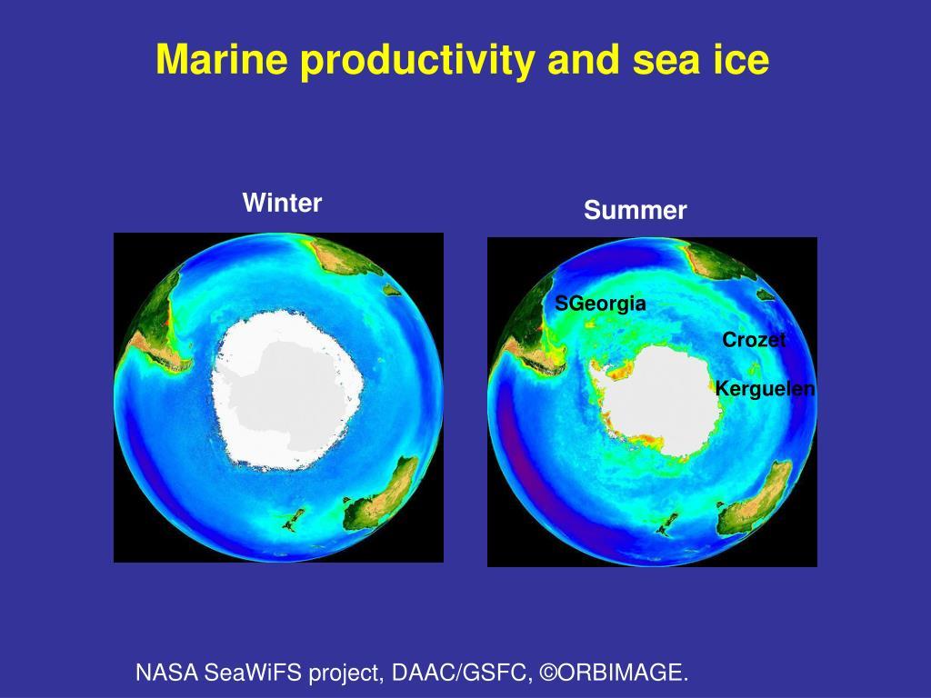 Marine productivity and sea ice