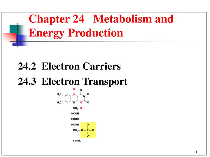 Chapter 24   Metabolism and Energy Production
