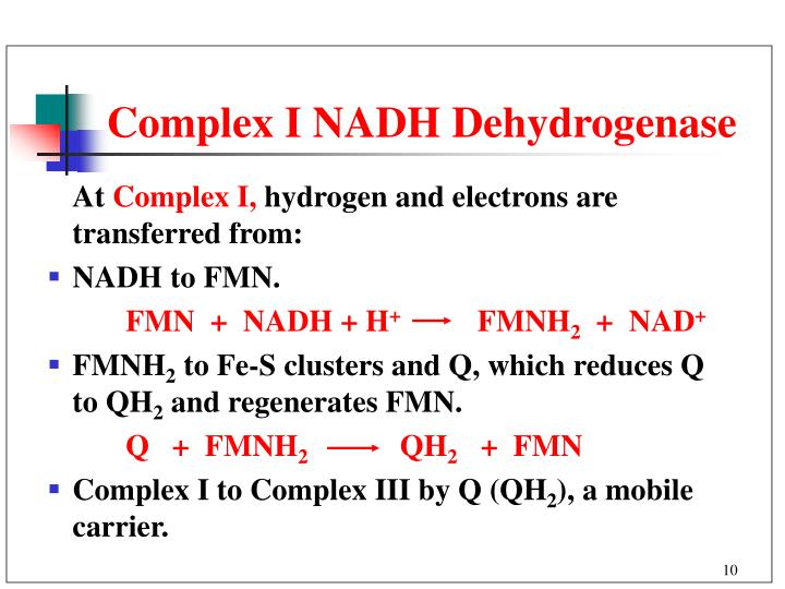 Complex I NADH Dehydrogenase