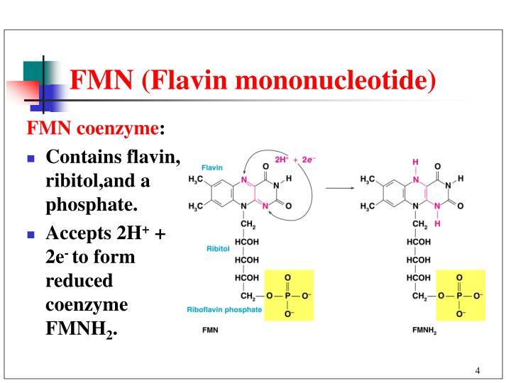 FMN (Flavin mononucleotide)