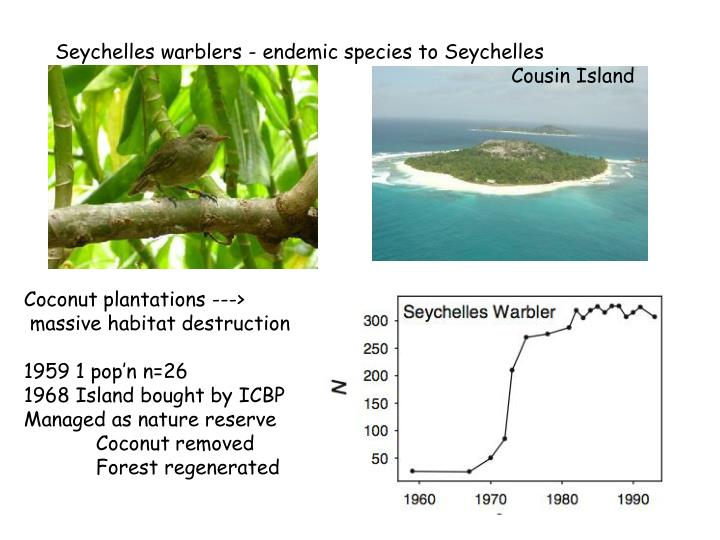 Seychelles warblers - endemic species to Seychelles    Cousin Island