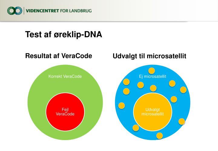 Test af øreklip-DNA