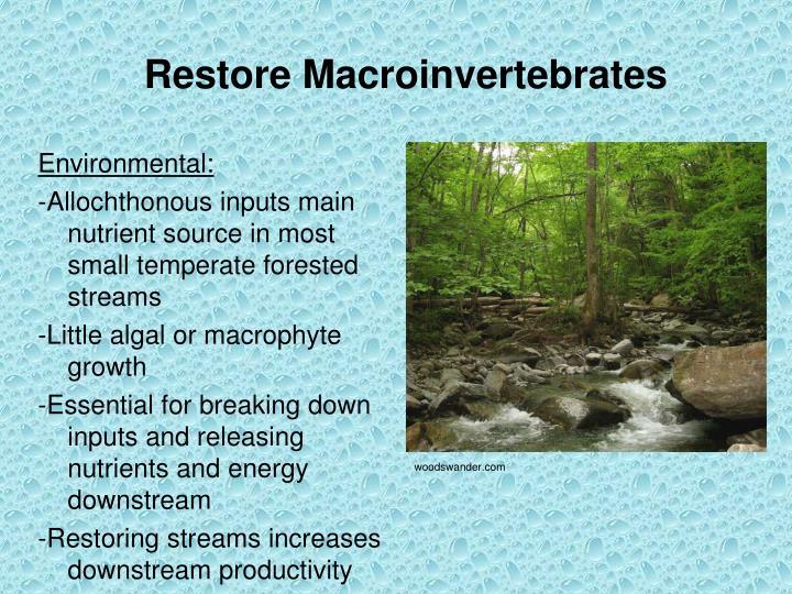 Restore Macroinvertebrates