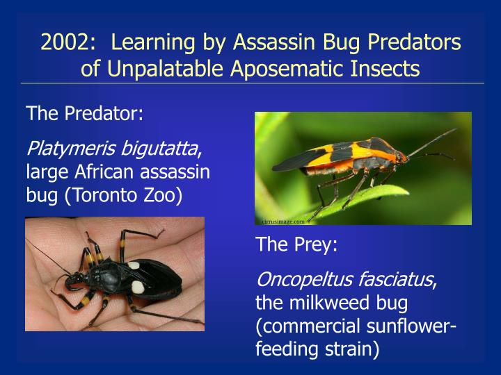 2002:  Learning by Assassin Bug Predators    of Unpalatable Aposematic Insects