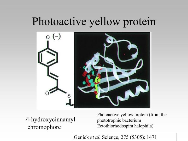 Photoactive yellow protein