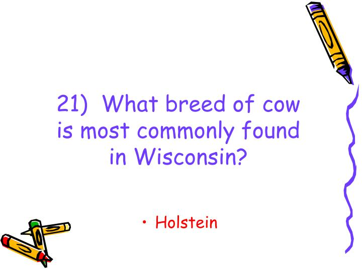21)  What breed of cow is most commonly found in Wisconsin?
