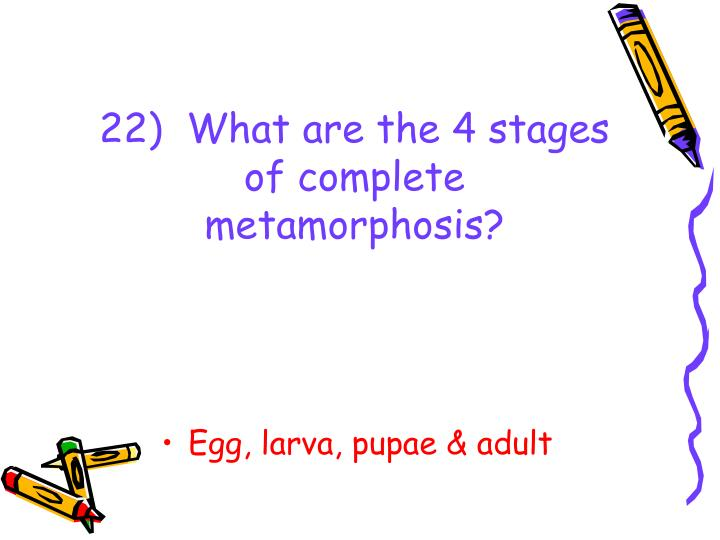 22)  What are the 4 stages of complete metamorphosis?