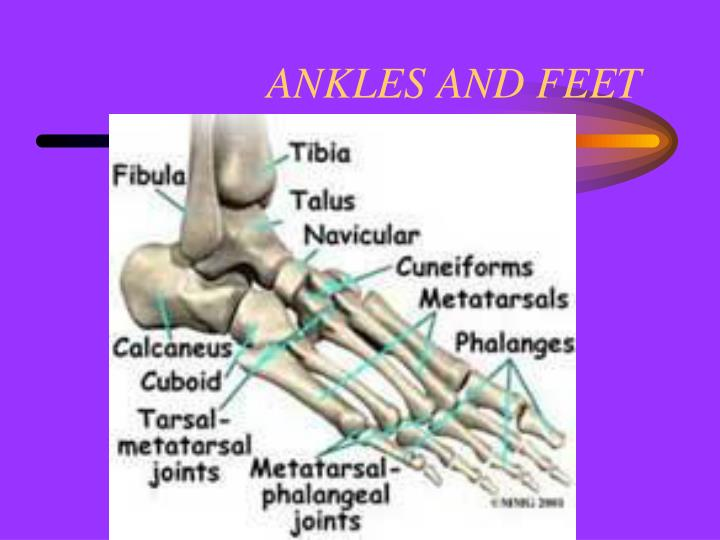 ANKLES AND FEET