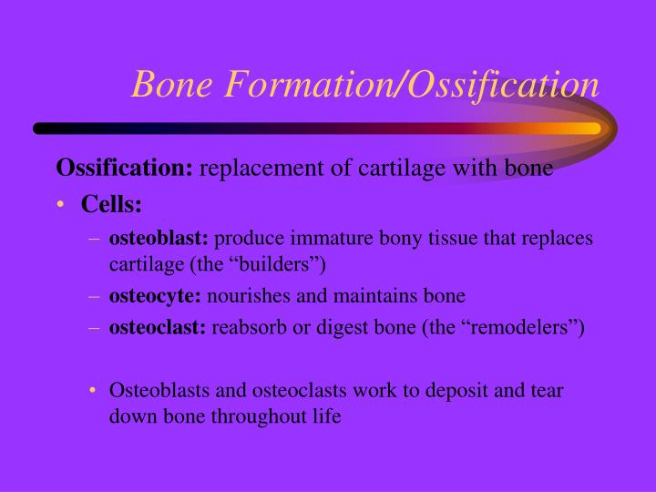 Bone Formation/Ossification