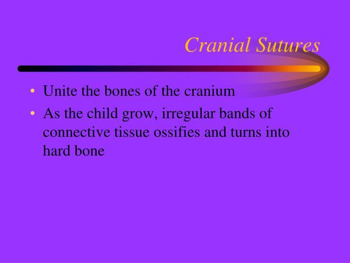Cranial Sutures