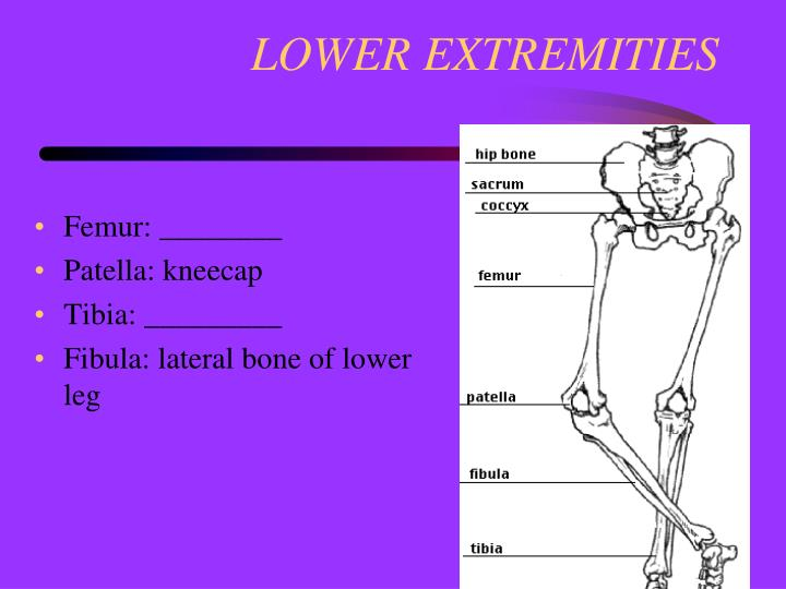 LOWER EXTREMITIES