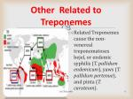 other related to treponemes