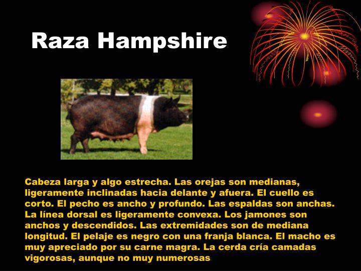 Raza Hampshire