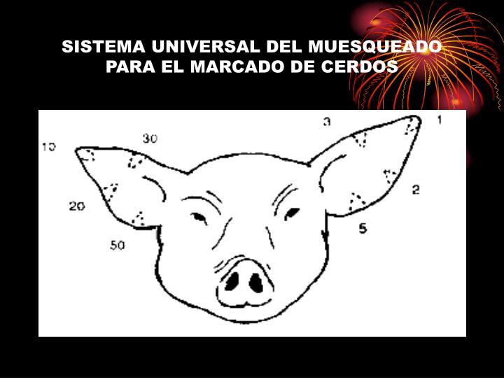 SISTEMA UNIVERSAL DEL MUESQUEADO PARA EL MARCADO DE CERDOS
