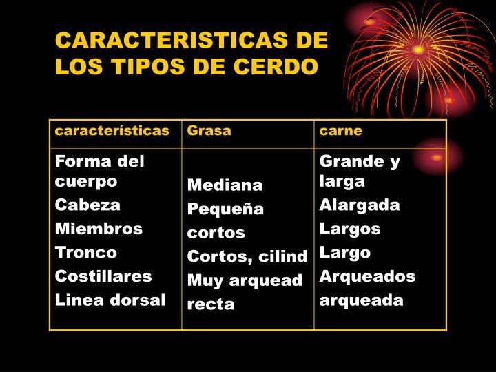 CARACTERISTICAS DE LOS TIPOS DE CERDO