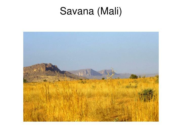 Savana (Mali)