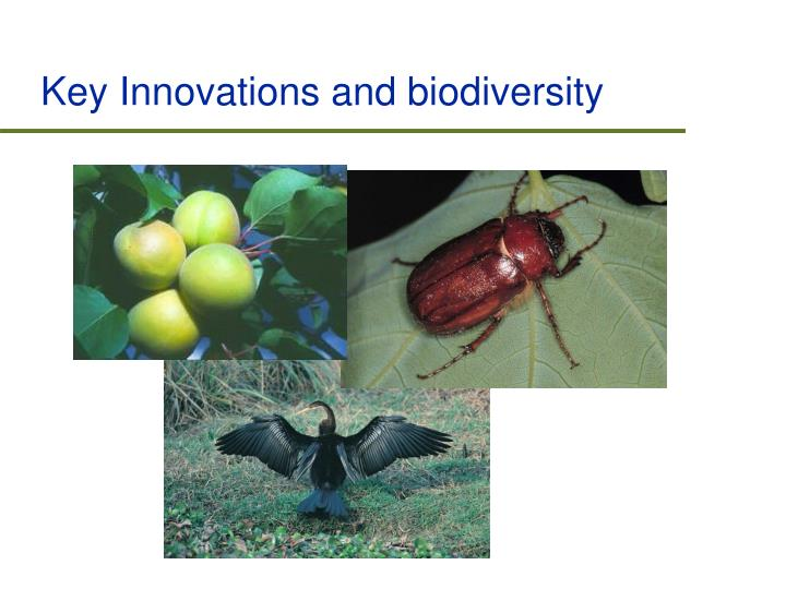 Key Innovations and biodiversity