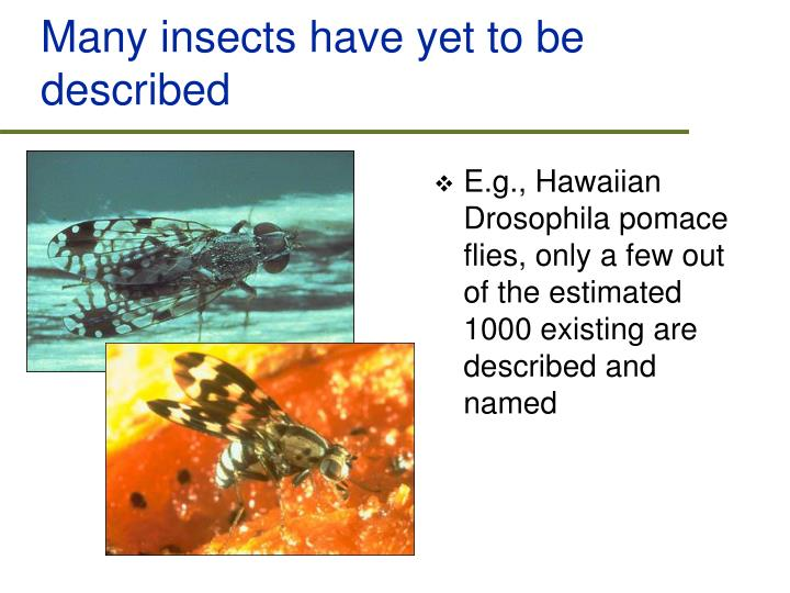 Many insects have yet to be described