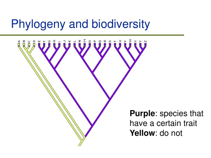 Phylogeny and biodiversity