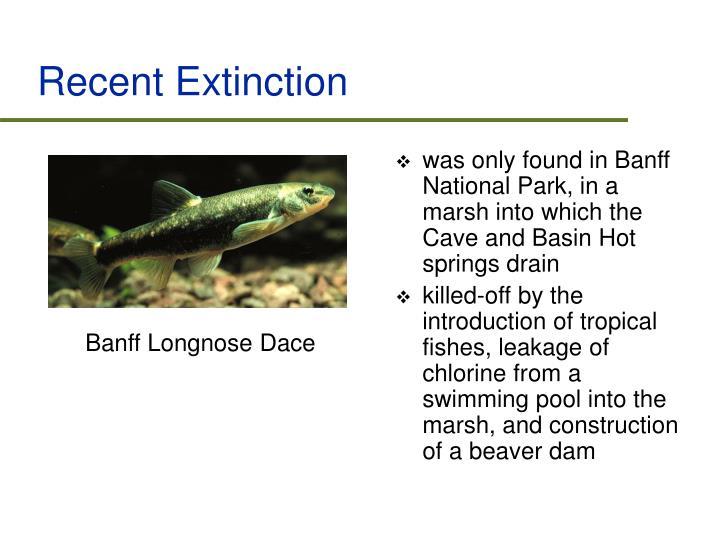 Recent Extinction