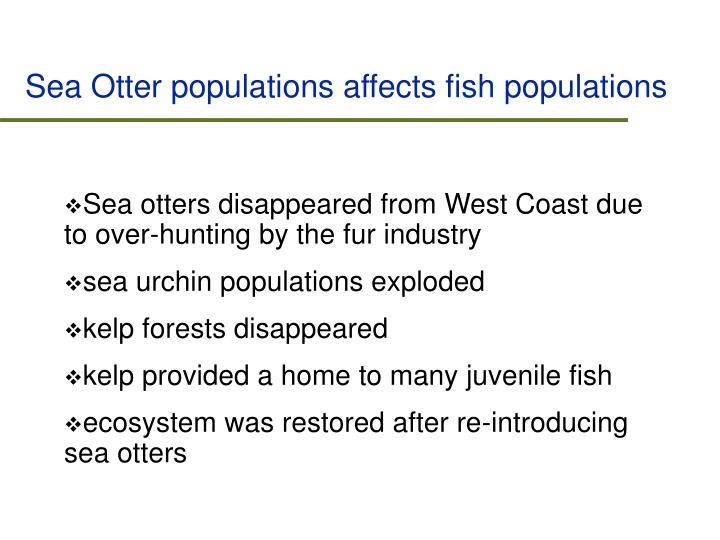 Sea Otter populations affects fish populations