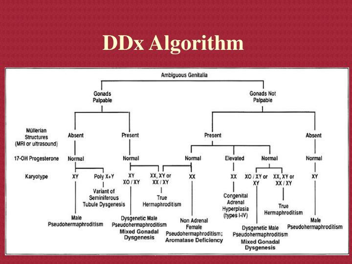 DDx Algorithm