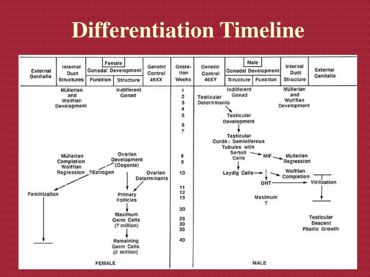 Differentiation Timeline