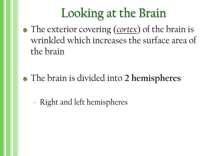Looking at the Brain