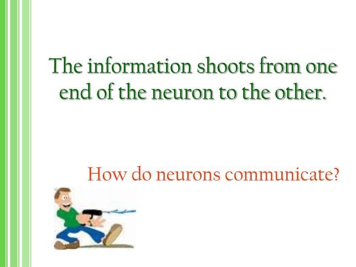 The information shoots from one end of the neuron to the other.