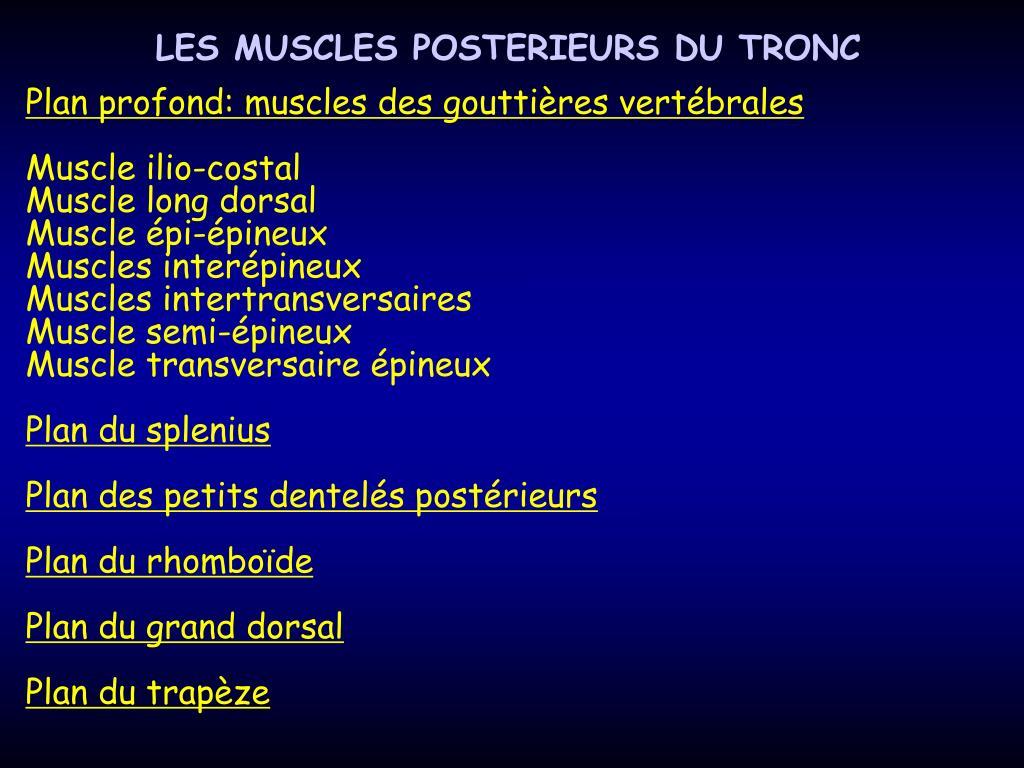 LES MUSCLES POSTERIEURS DU TRONC