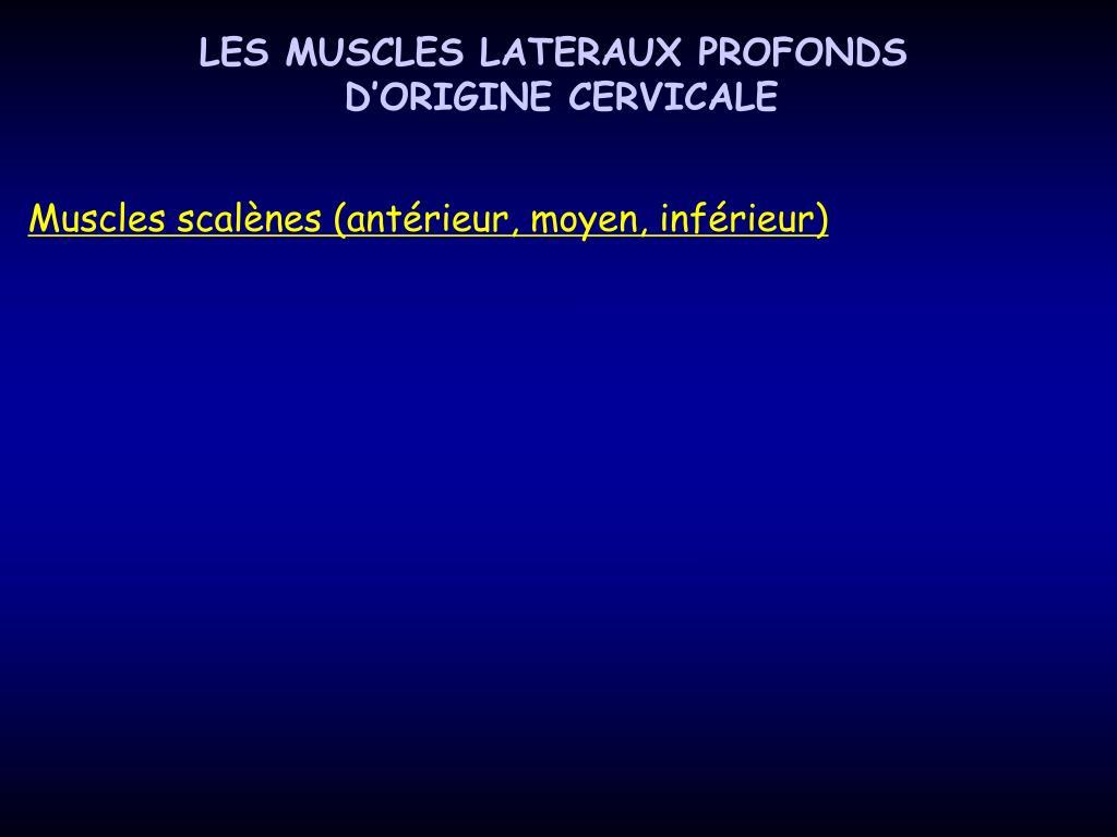 LES MUSCLES LATERAUX PROFONDS