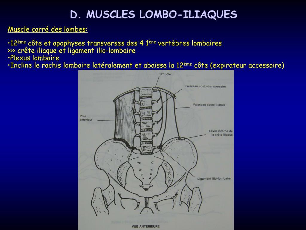 D. MUSCLES LOMBO-ILIAQUES