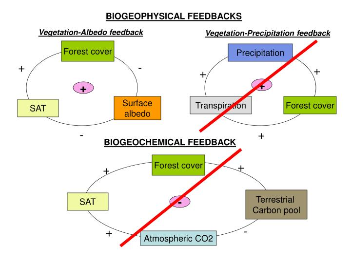 BIOGEOPHYSICAL FEEDBACKS