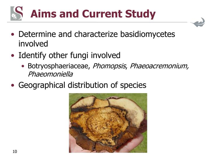 Aims and Current Study