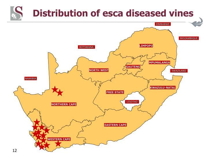 Distribution of esca diseased vines