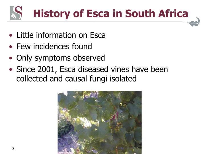 History of Esca in South Africa