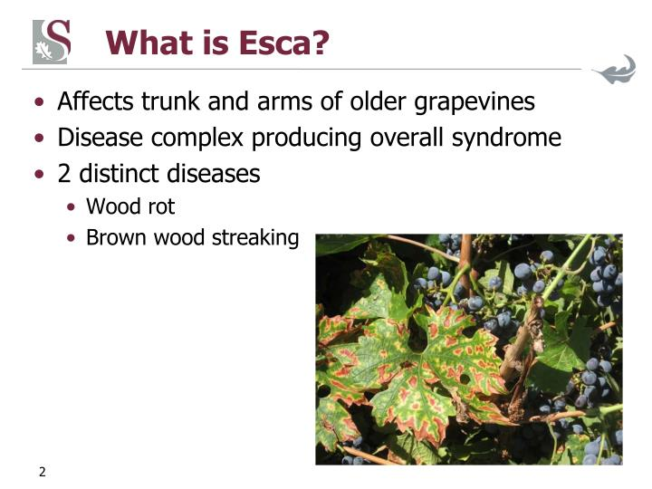 What is Esca?