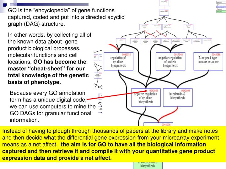 "GO is the ""encyclopedia"" of gene functions captured, coded and put into a directed acyclic graph (DAG) structure."