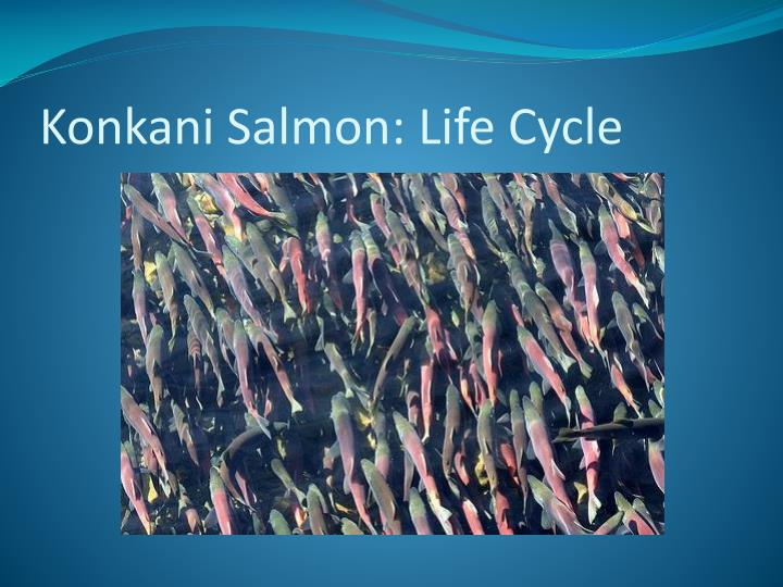 Konkani salmon life cycle
