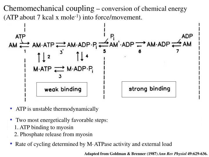 Chemomechanical coupling