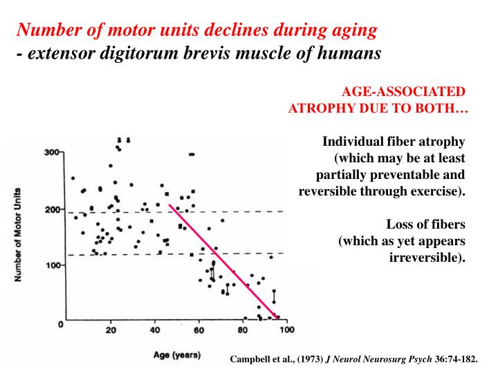 Number of motor units declines during aging