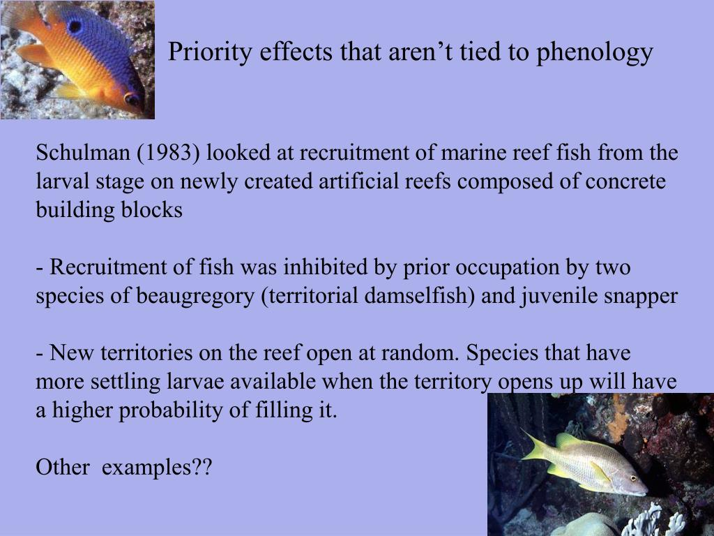 Priority effects that aren't tied to phenology