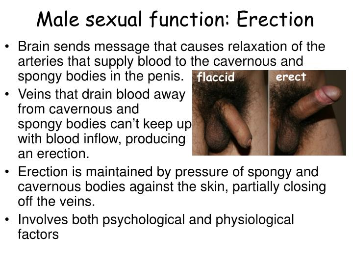 i cant keep an erection during sex