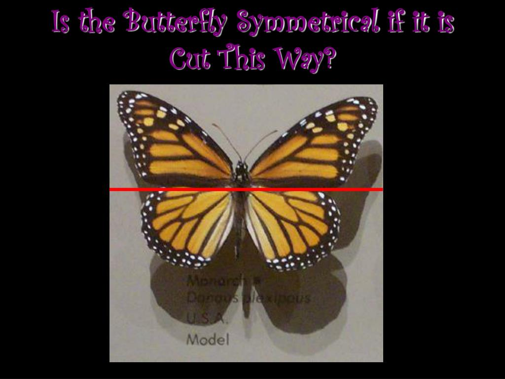 Is the Butterfly Symmetrical if it is Cut This Way?