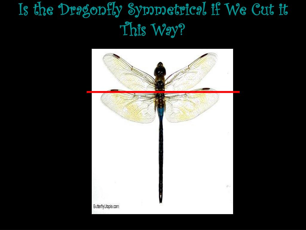 Is the Dragonfly Symmetrical if We Cut it This Way?
