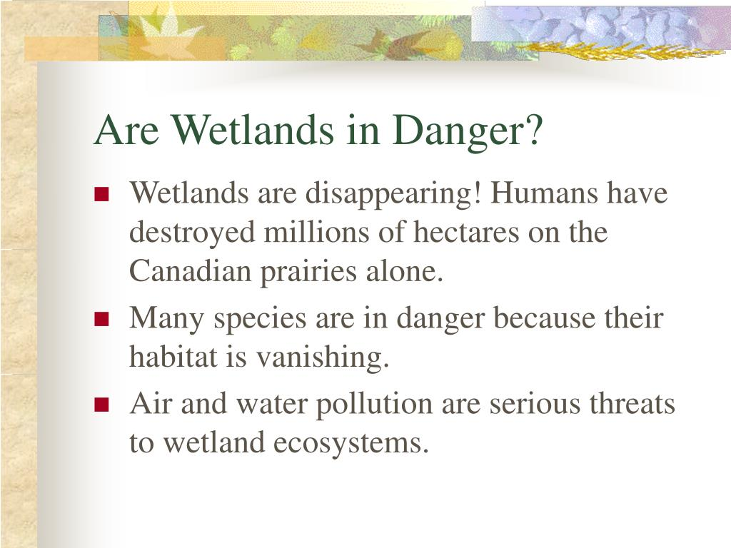 Are Wetlands in Danger?