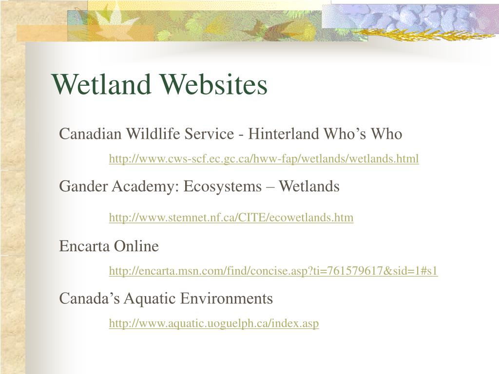 Wetland Websites